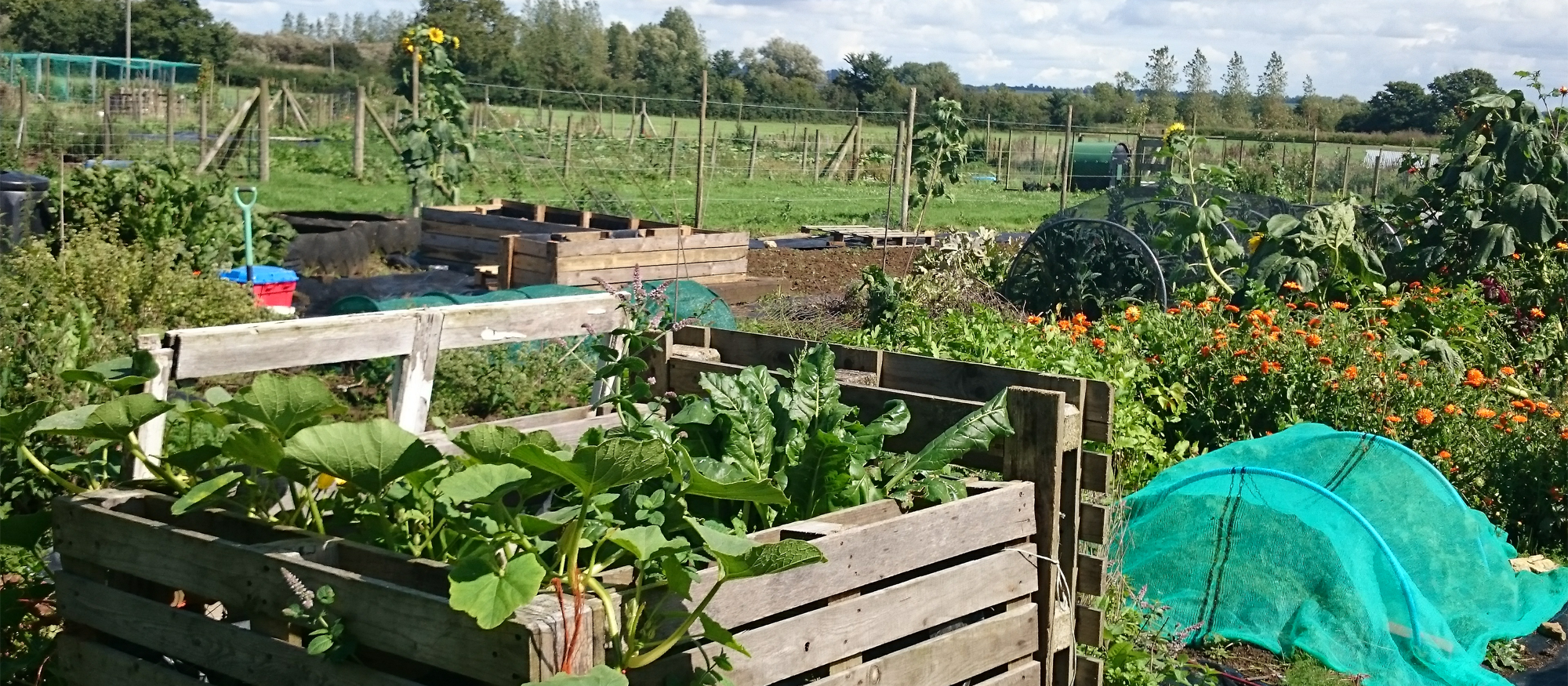 july 2015 veg beds 002