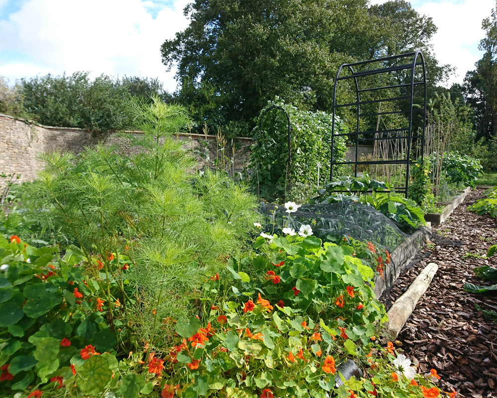 kitchen garden raised beds late summer